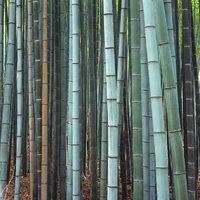 Wucht - Eine Wucht Bambusstämme