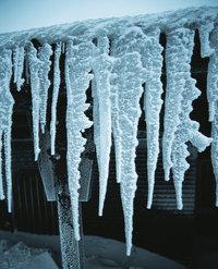 Zapfen - Mehrere Zapfen aus Eis