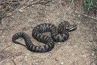 Zeichnung - Zeichnung einer Schlange